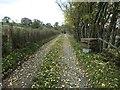 NY5245 : Fallen leaves on the way to Bascodyke Head by Christine Johnstone