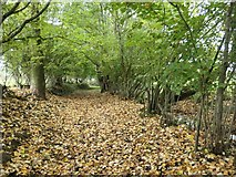 NY5245 : Fallen leaves on the footpath near Aimbank by Christine Johnstone