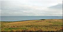 NT9955 : Coastal land north of Berwick by Robin Webster