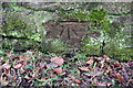 NX9920 : Benchmark on south side of Low Moresby road by Luke Shaw
