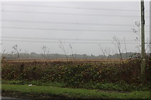 SU5390 : Field by Abingdon Road, Didcot by David Howard