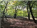 SU9585 : Burnham Beeches, start of autumn colour  by David Hawgood