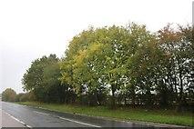 SU2388 : The A420, Shrivenham by David Howard