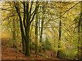 SO6611 : Beeches at Soudley Ponds by Jonathan Billinger