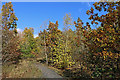 SO7583 : Severn Valley Country Park near Alveley, Shropshire by Roger  Kidd