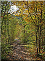 SO7583 : Woodland track in the Country Park near Alveley, Shropshire by Roger  Kidd