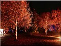 SK3386 : Illuminated trees in the Botanical Gardens by Graham Hogg