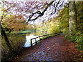 H4772 : Fallen leaves, Highway to Health path, Mullaghmore by Kenneth  Allen