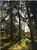 SK2579 : Granby Wood by Graham Hogg