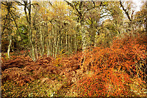 NH5043 : Autumn in Balblair Wood by Julian Paren