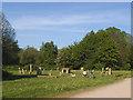 SE3231 : Stone circle near Thwaites Mill by Stephen Craven