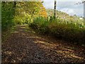SO7138 : Green lane beside Dog Hill Wood by Philip Halling