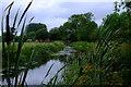 SJ3024 : View through the bullrushes by John Winder