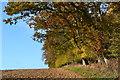 SU4045 : Autumn overhang by David Martin