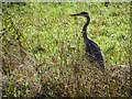 SO8844 : A heron in Croome Park by Philip Halling