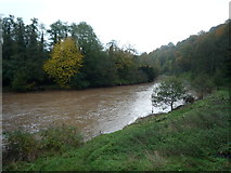 SO5074 : The River Teme (Ludlow) by Fabian Musto