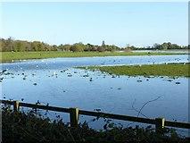SK6443 : Flooded meadows, Burton Joyce by Alan Murray-Rust