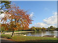 TQ3378 : Autumn in Burgess Park by Malc McDonald