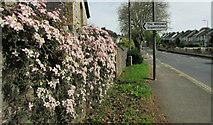 SX9066 : Clematis, Barton Hill Road, Torquay by Derek Harper
