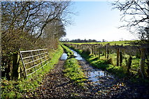 H5371 : Muddy lane, Bancran by Kenneth  Allen
