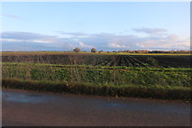 TL3778 : Field by Chatteris Road, Somersham by David Howard