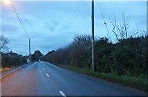 TF4605 : Fridaybridge Road before Elm by David Howard