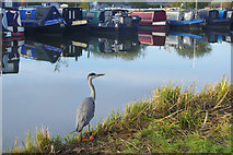 SP9122 : Heron - Grove Lock Marina by Stephen McKay