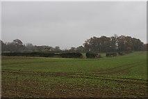 SO8386 : Farmland near Enville by Bill Boaden