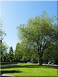 NS5666 : Tree outside Kelvingrove Museum by Stephen Craven