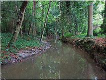 TQ1293 : Hartsbourne Stream by Mike Quinn