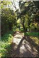 SX8965 : Path near Torquay Grammar Schools by Derek Harper