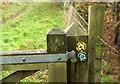 ST5467 : Waymarks in Little Down Wood by Derek Harper
