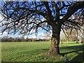 SP2964 : Old cherry tree, St Nicholas Park, Warwick by Robin Stott