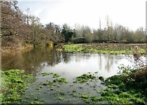TG2105 : High water in the River Yare by Harford Bridge by Evelyn Simak