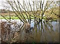 TG2105 : Reflections in the River Yare by Evelyn Simak