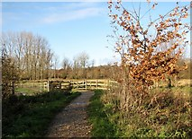 TG2105 : Following the main path on Marston Marsh by Evelyn Simak