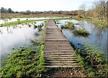 TG2105 : Boardwalk on Marston Marsh by Evelyn Simak