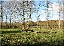 TG2105 : Pasture on Marston Marsh by Evelyn Simak