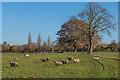 TQ0752 : Lower Hammond's Farm by Ian Capper