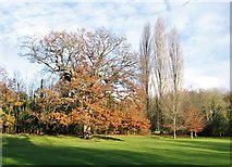 TG2105 : Autumnal trees on Eaton Golf Course by Evelyn Simak