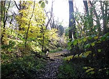 TG2105 : A path in Danby Wood by Evelyn Simak