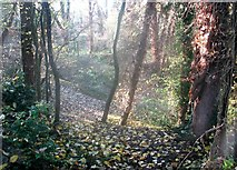 TG2105 : Autumn leaves on one of the paths by Evelyn Simak