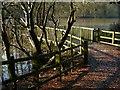 SK6465 : Rufford Abbey Country Park – Rufford Lake footpath by Alan Murray-Rust