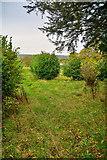 SS9712 : Tiverton : Tidcombe Hall Garden by Lewis Clarke