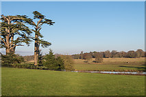 SJ5509 : Attingham Park by Ian Capper