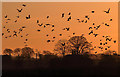 NT6734 : Sunset birds at Charterhouse by Walter Baxter