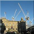 NT2574 : Cranes catching the sunlight by M J Richardson