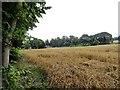 NZ0852 : Field at Shotley Bridge by Robert Graham
