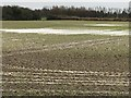TF4208 : Flooded land opposite The Manor House in Wisbech St Mary by Richard Humphrey