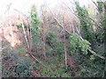 TQ3838 : Former railway cutting, East Grinstead by Malc McDonald